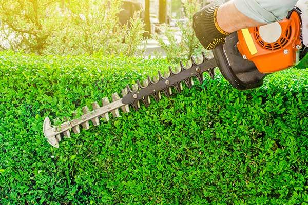 thumb-hedge-cutting