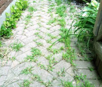 weed-spraying-before